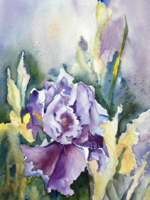 Royal Iris