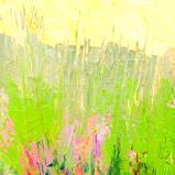 Mini Field